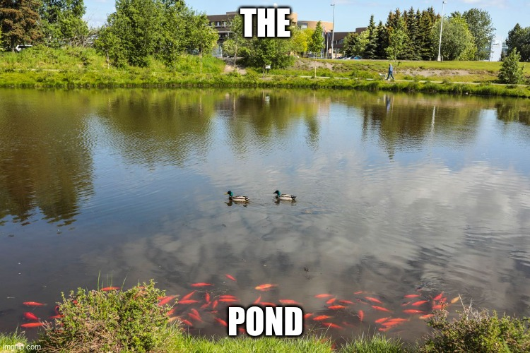 the                                                                                                                              |  THE; POND | made w/ Imgflip meme maker