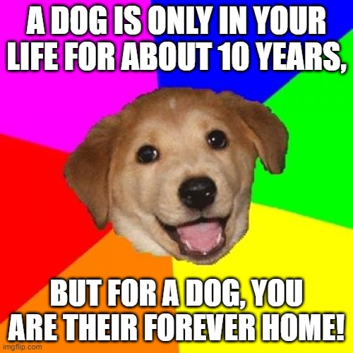 Advice from a dog lover.... |  A DOG IS ONLY IN YOUR LIFE FOR ABOUT 10 YEARS, BUT FOR A DOG, YOU ARE THEIR FOREVER HOME! | image tagged in memes,advice dog,forever,home,life | made w/ Imgflip meme maker