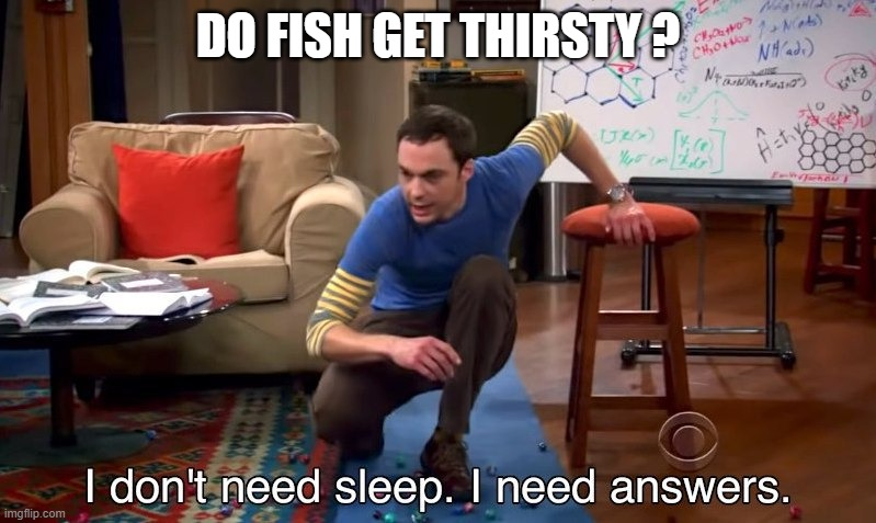 I don't need sleep I need answers |  DO FISH GET THIRSTY ? | image tagged in i don't need sleep i need answers | made w/ Imgflip meme maker