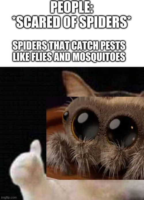 Jumping spider cute tho |  PEOPLE: *SCARED OF SPIDERS*; SPIDERS THAT CATCH PESTS LIKE FLIES AND MOSQUITOES | image tagged in approved crying cat,spider | made w/ Imgflip meme maker