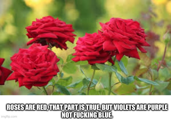 roses are red |  ROSES ARE RED, THAT PART IS TRUE, BUT VIOLETS ARE PURPLE NOT FUCKING BLUE. | image tagged in roses are red | made w/ Imgflip meme maker