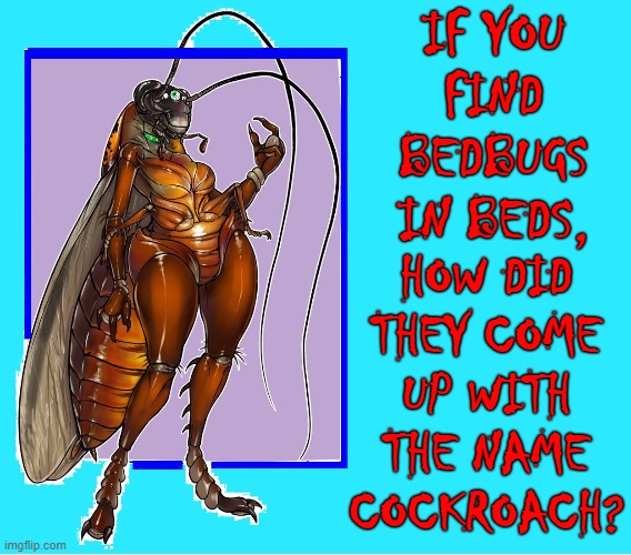 Meet Cuka, la cucaracha |  IF YOU FIND BEDBUGS IN BEDS, HOW DID THEY COME UP WITH THE NAME COCKROACH? | image tagged in vince vance,cockroaches,bedbugs,beds,memes,names for things | made w/ Imgflip meme maker