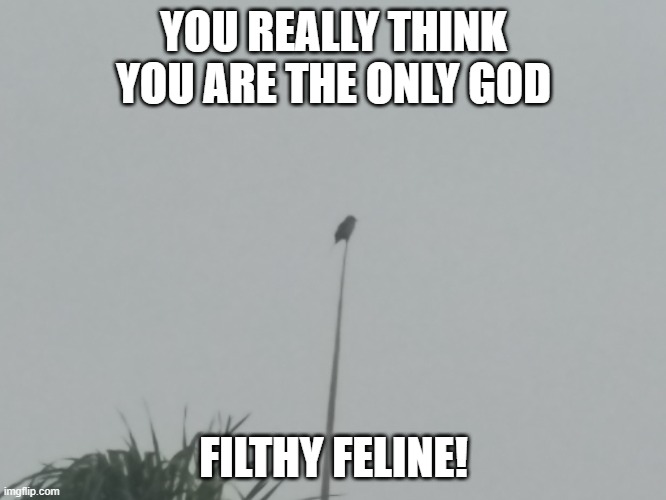 The Other pole Gpd,Tree Bird! |  YOU REALLY THINK YOU ARE THE ONLY GOD; FILTHY FELINE! | image tagged in birds,neighborhood,rivalry,rebel | made w/ Imgflip meme maker