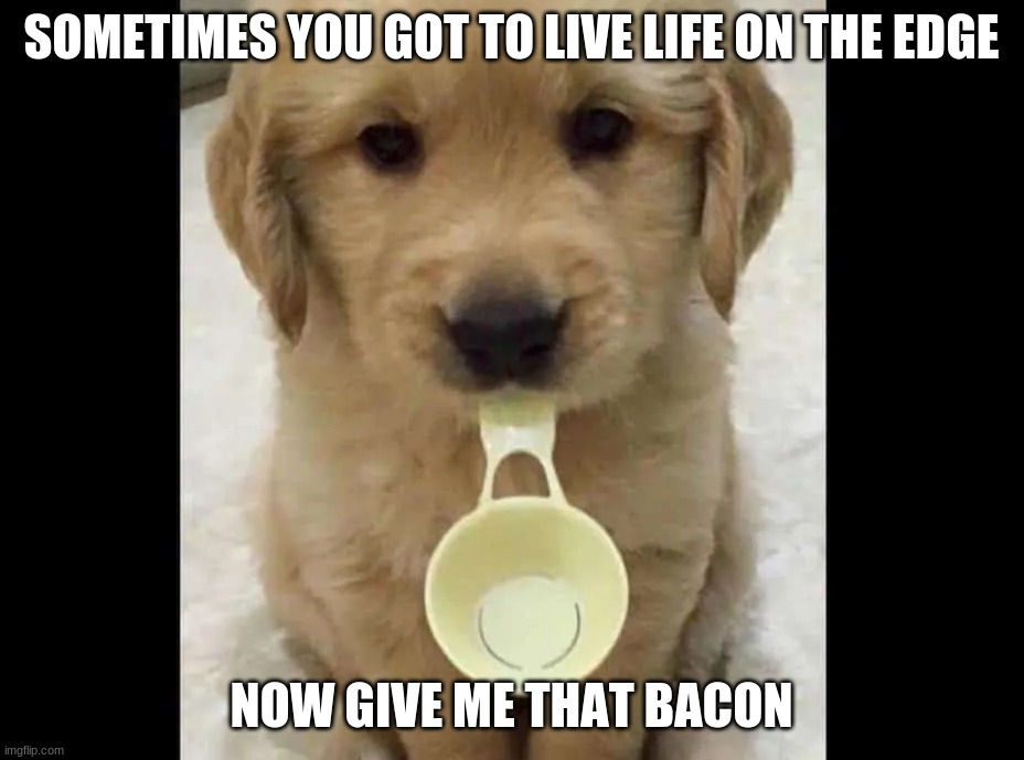 wait what |  SOMETIMES YOU GOT TO LIVE LIFE ON THE EDGE; NOW GIVE ME THAT BACON | image tagged in dogs,bacon | made w/ Imgflip meme maker