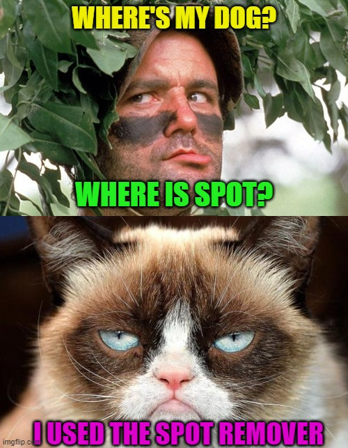 Clever Cat |  WHERE'S MY DOG? WHERE IS SPOT? I USED THE SPOT REMOVER | image tagged in grumpy cat not amused,dogs an cats,grumpy cat,pranks,jokes | made w/ Imgflip meme maker