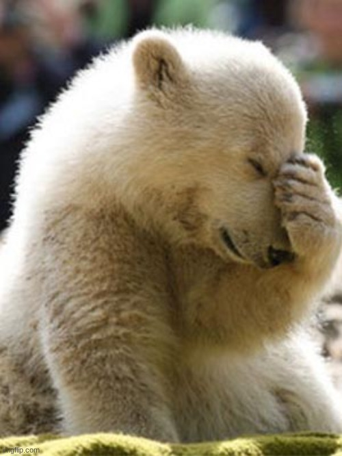 Facepalm Bear Meme | image tagged in memes,facepalm bear | made w/ Imgflip meme maker