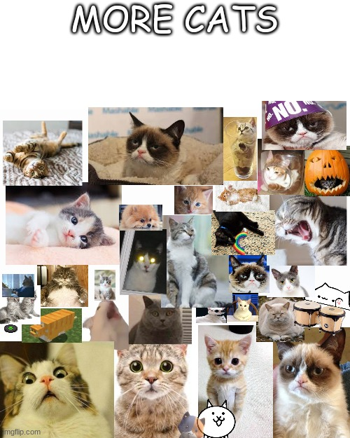 I took forever to do this and here it is, I <3 cats |  MORE CATS | image tagged in blank screen,grumpy cat,funny | made w/ Imgflip meme maker