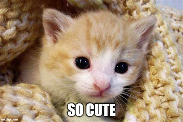 cute animals #2 |  SO CUTE | image tagged in aww,cute cat,cute,cute animals,memes,pets | made w/ Imgflip meme maker