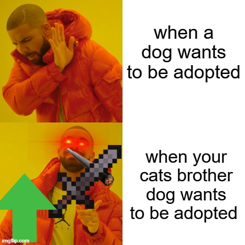 adopting dogs |  when a dog wants to be adopted; when your cats brother dog wants to be adopted | image tagged in memes,drake hotline bling | made w/ Imgflip meme maker