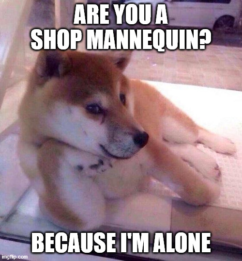 Flirting Doge |  ARE YOU A SHOP MANNEQUIN? BECAUSE I'M ALONE | image tagged in flirting doge | made w/ Imgflip meme maker