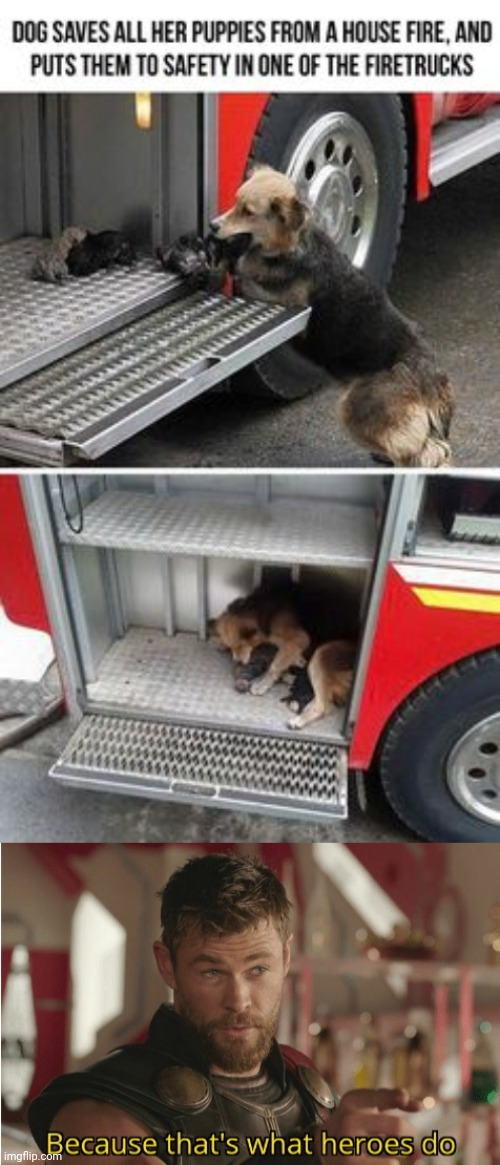 A Dog saves all of her puppies from a house fire. | image tagged in that s what heroes do,funny,memes,dogs,puppies,wholesome | made w/ Imgflip meme maker