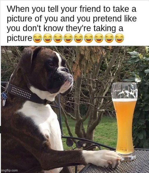 Strike a pose | image tagged in funny picture,dog,beer | made w/ Imgflip meme maker