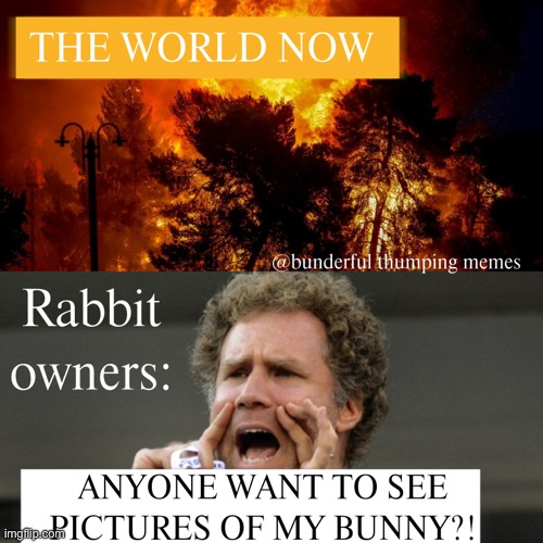 world ending | image tagged in bunny,rabbit | made w/ Imgflip meme maker
