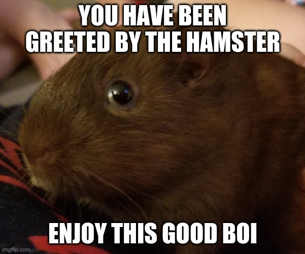 Hamester |  YOU HAVE BEEN GREETED BY THE HAMSTER; ENJOY THIS GOOD BOI | image tagged in good boy | made w/ Imgflip meme maker