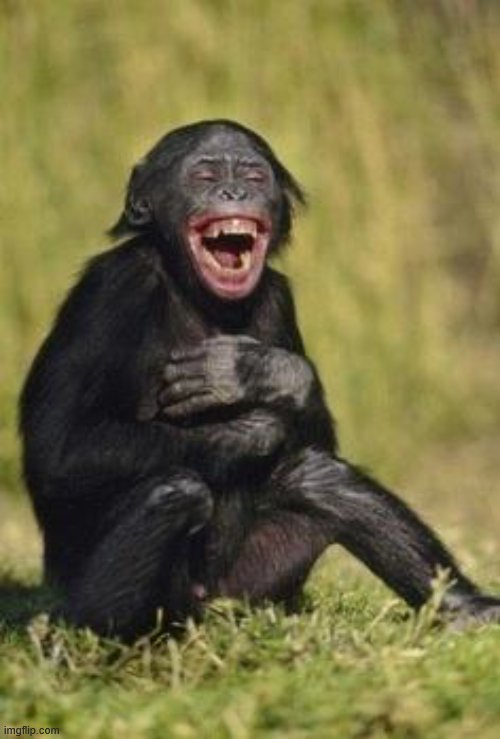 Laughing monkey | image tagged in laughing monkey | made w/ Imgflip meme maker