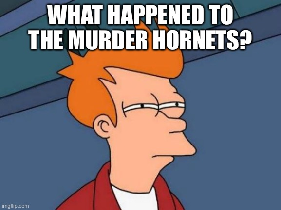 Futurama Fry Meme |  WHAT HAPPENED TO THE MURDER HORNETS? | image tagged in memes,futurama fry,funny | made w/ Imgflip meme maker