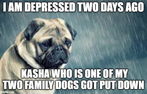 RIP Kasha |  I AM DEPRESSED TWO DAYS AGO; KASHA WHO IS ONE OF MY TWO FAMILY DOGS GOT PUT DOWN | image tagged in dog,dead,depression,sad | made w/ Imgflip meme maker