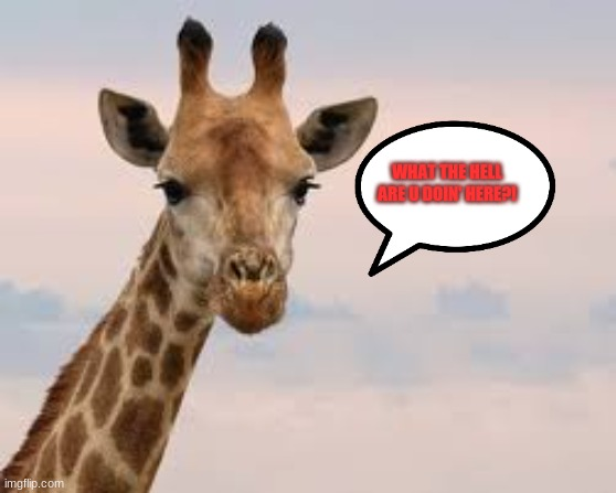 Mad Giraffe |  WHAT THE HELL ARE U DOIN' HERE?! | image tagged in xd,hahahaha | made w/ Imgflip meme maker