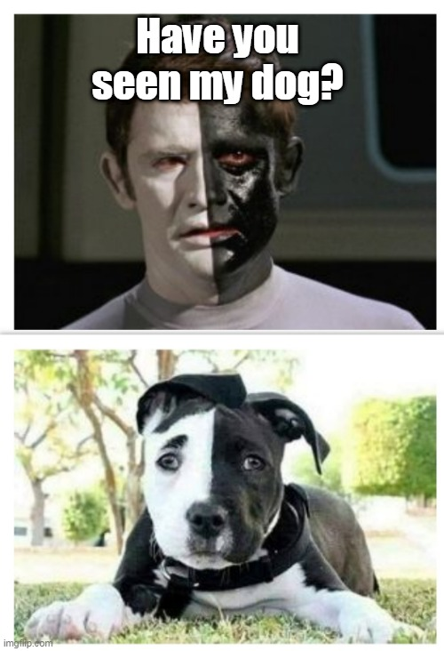 Star Trek Dog |  Have you seen my dog? | image tagged in star trek,dogs,memes | made w/ Imgflip meme maker