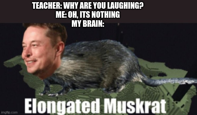 Elongated Muskrat |  TEACHER: WHY ARE YOU LAUGHING? ME: OH, ITS NOTHING MY BRAIN: | image tagged in fun,elon musk | made w/ Imgflip meme maker