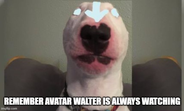 avatar walter |  REMEMBER AVATAR WALTER IS ALWAYS WATCHING | image tagged in walter | made w/ Imgflip meme maker