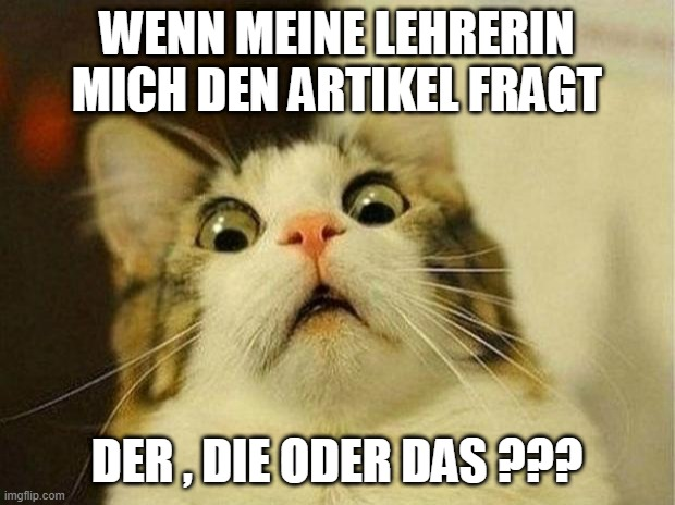 Artikel- der die oder das ? |  WENN MEINE LEHRERIN MICH DEN ARTIKEL FRAGT; DER , DIE ODER DAS ??? | image tagged in memes,scared cat | made w/ Imgflip meme maker