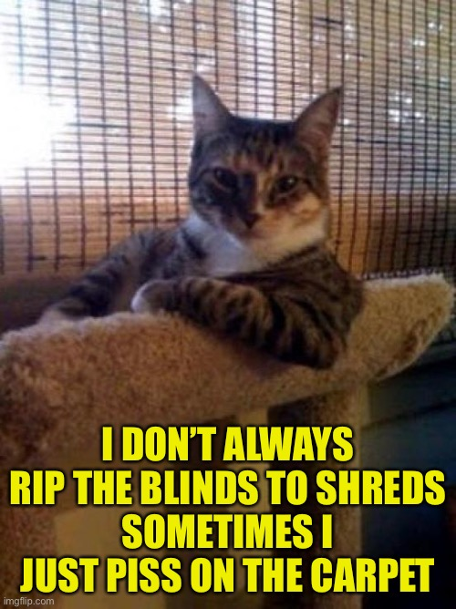 The Most Interesting Cat In The World |  I DON'T ALWAYS RIP THE BLINDS TO SHREDS SOMETIMES I JUST PISS ON THE CARPET | image tagged in memes,the most interesting cat in the world | made w/ Imgflip meme maker