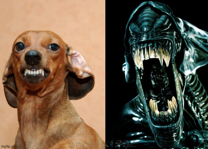 image tagged in dog,alien,aliens,puppy,horror movie,horror | made w/ Imgflip meme maker