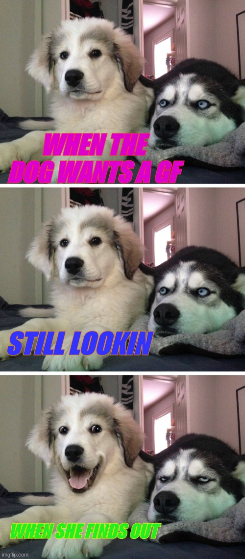 Bad pun dogs |  WHEN THE DOG WANTS A GF; STILL LOOKIN; WHEN SHE FINDS OUT | image tagged in bad pun dogs | made w/ Imgflip meme maker
