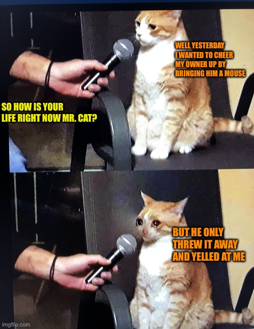 My First Post In The Stream |  WELL YESTERDAY I WANTED TO CHEER MY OWNER UP BY BRINGING HIM A MOUSE; SO HOW IS YOUR LIFE RIGHT NOW MR. CAT? BUT HE ONLY THREW IT AWAY AND YELLED AT ME | image tagged in cat interview crying,pets,cats,memes,funny,sad | made w/ Imgflip meme maker
