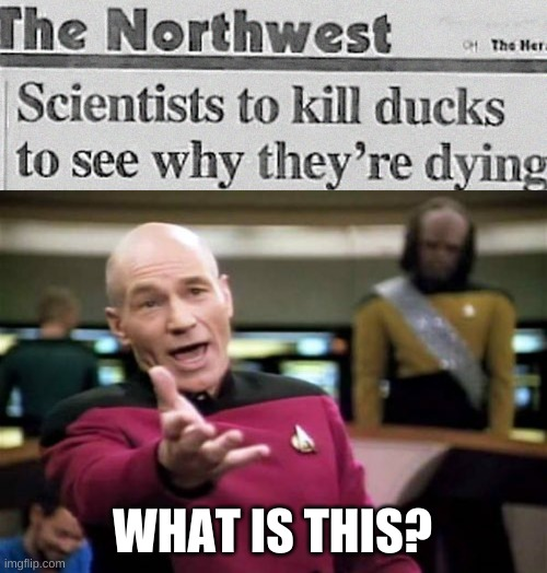 omg |  WHAT IS THIS? | image tagged in memes,picard wtf | made w/ Imgflip meme maker