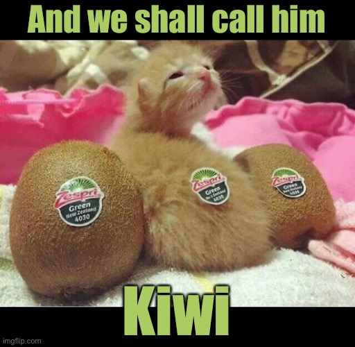 Little Kiwi |  And we shall call him; Kiwi | image tagged in funny memes,funny cats,funny cat memes,funny,cats | made w/ Imgflip meme maker