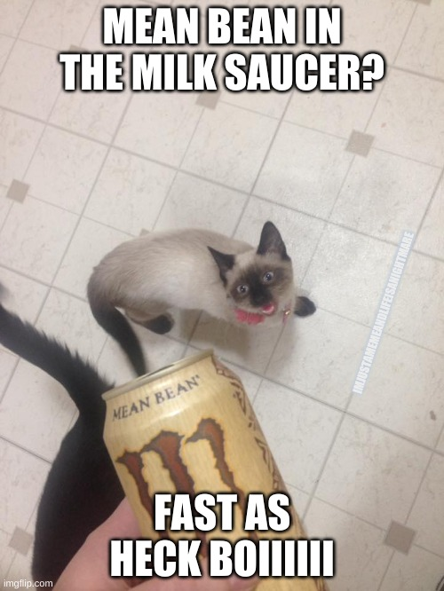He doesn't actually like Mean Bean, and is more partial to farm-fresh milk. He's still the fastest boi alive. |  MEAN BEAN IN THE MILK SAUCER? IMJUSTAMEMEANDLIFEISANIGHTMARE; FAST AS HECK BOIIIIII | image tagged in monster,fast,cat,cats | made w/ Imgflip meme maker