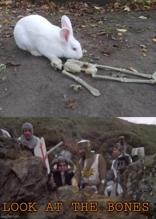 THAT'S THE MOST FOUL, CRUEL, BAD TEMPERED RODENT YOU EVER SET EYES ON |  LOOK AT THE BONES | image tagged in rabbit,bunny,monty python,spooktober,skeleton,monty python and the holy grail | made w/ Imgflip meme maker