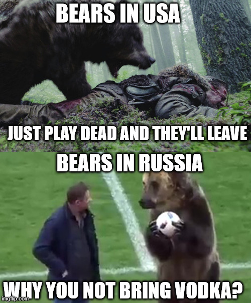 Bears: America vs Russia |  BEARS IN USA; JUST PLAY DEAD AND THEY'LL LEAVE; BEARS IN RUSSIA; WHY YOU NOT BRING VODKA? | image tagged in bear,attack,usa,russia,comparison | made w/ Imgflip meme maker