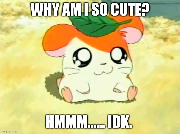 ~The cute hamster~ UwU |  WHY AM I SO CUTE? HMMM...... IDK. | image tagged in memes,hamtaro | made w/ Imgflip meme maker