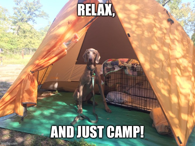 Camping Weim |  RELAX, AND JUST CAMP! | image tagged in weim,weimaraner,camp,camping,funny,relax | made w/ Imgflip meme maker