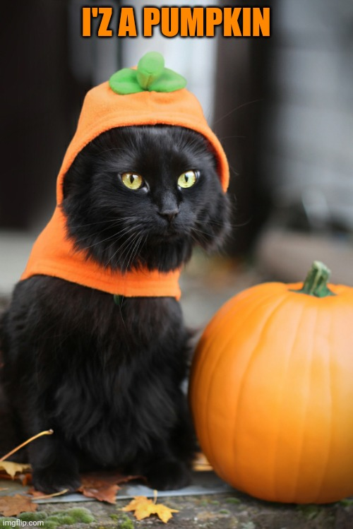 PUMPKIN KITTY |  I'Z A PUMPKIN | image tagged in cats,funny cats,pumpkin,spooktober | made w/ Imgflip meme maker