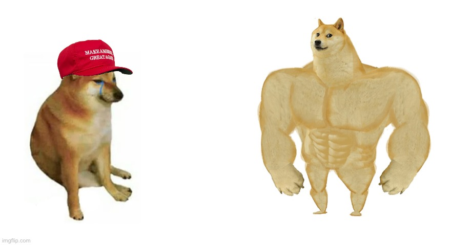 Cheems MAGA hat vs. swole doge | image tagged in swole doge vs cheems flipped,cheems,buff doge vs cheems | made w/ Imgflip meme maker