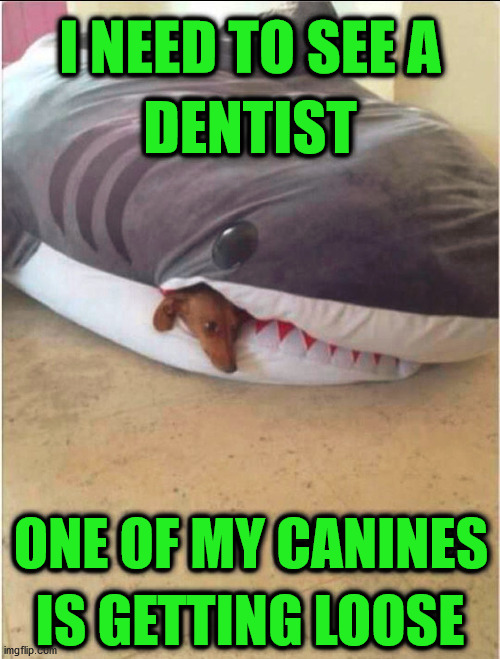I NEED TO SEE A; DENTIST; ONE OF MY CANINES; IS GETTING LOOSE | image tagged in repost | made w/ Imgflip meme maker