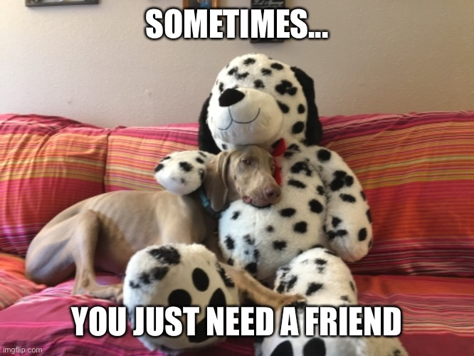 Friends |  SOMETIMES... YOU JUST NEED A FRIEND | image tagged in weim,weimaraner,dog,funny,friends,cute | made w/ Imgflip meme maker