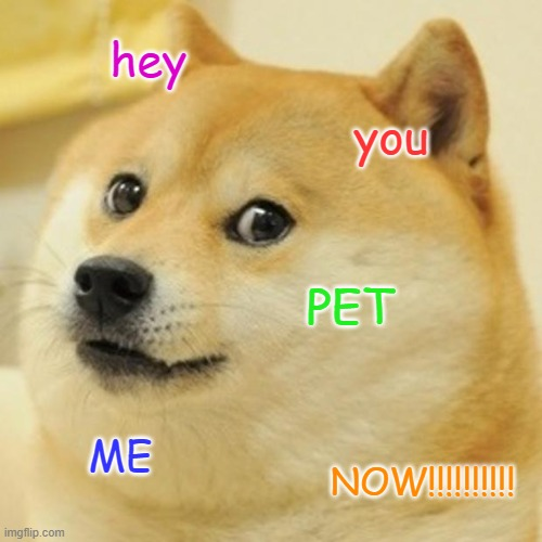 Pet meh. |  hey; you; PET; ME; NOW!!!!!!!!!! | image tagged in memes,doge | made w/ Imgflip meme maker