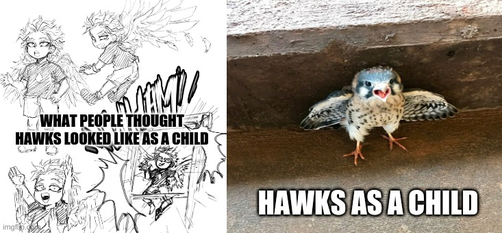 Hawks as a child |  WHAT PEOPLE THOUGHT HAWKS LOOKED LIKE AS A CHILD; HAWKS AS A CHILD | image tagged in boku no hero academia | made w/ Imgflip meme maker