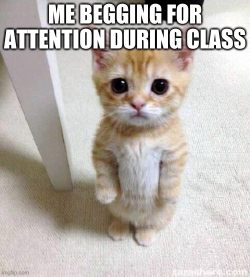 Cute Cat |  ME BEGGING FOR ATTENTION DURING CLASS | image tagged in memes,cute cat | made w/ Imgflip meme maker