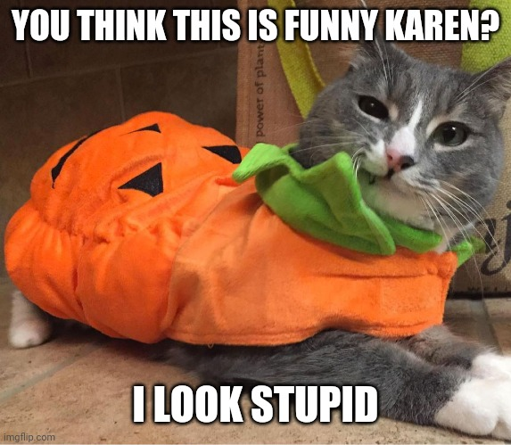 KITTY JUST NEEDS SNUGGLES |  YOU THINK THIS IS FUNNY KAREN? I LOOK STUPID | image tagged in cats,funny cats,pumpkin,halloween,spooktober | made w/ Imgflip meme maker