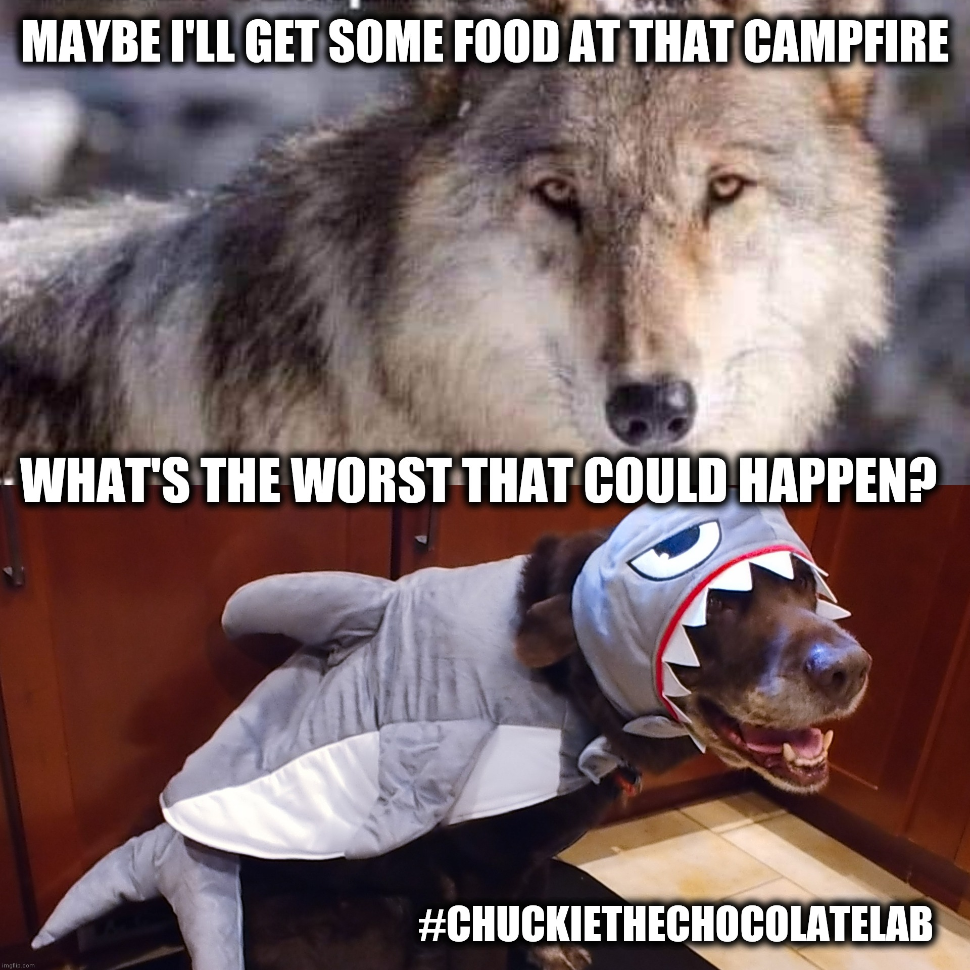 Wolves made their choices |  MAYBE I'LL GET SOME FOOD AT THAT CAMPFIRE; WHAT'S THE WORST THAT COULD HAPPEN? #CHUCKIETHECHOCOLATELAB | image tagged in chuckie the chocolate lab,wolves,funny,halloween,memes,dogs | made w/ Imgflip meme maker
