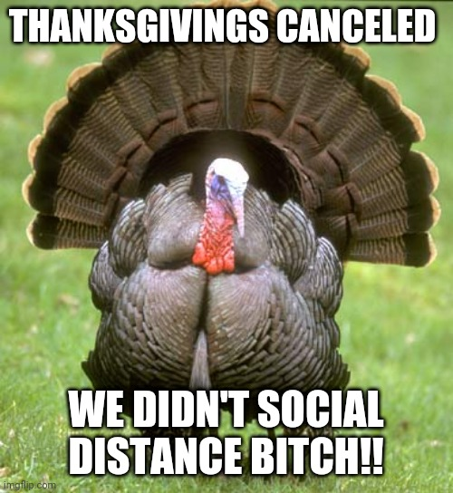 Thanksgivings Canceled |  THANKSGIVINGS CANCELED; WE DIDN'T SOCIAL DISTANCE BITCH!! | image tagged in memes,turkey | made w/ Imgflip meme maker
