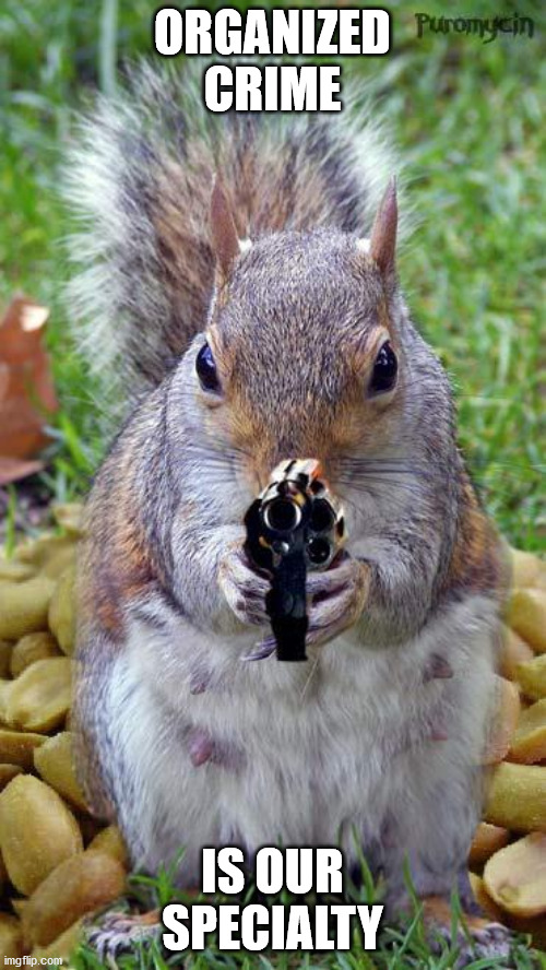 funny squirrels with guns (5) | ORGANIZED CRIME IS OUR SPECIALTY | image tagged in funny squirrels with guns 5 | made w/ Imgflip meme maker