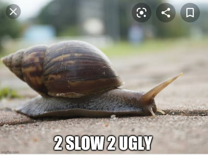 The Opposite of Fast |  2 SLOW 2 UGLY | image tagged in snail,slow,ugly | made w/ Imgflip meme maker