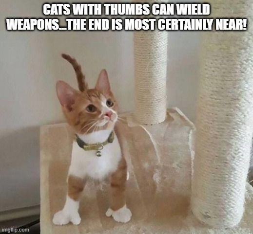 cat with thumbs |  CATS WITH THUMBS CAN WIELD WEAPONS...THE END IS MOST CERTAINLY NEAR! | image tagged in cute kitten | made w/ Imgflip meme maker